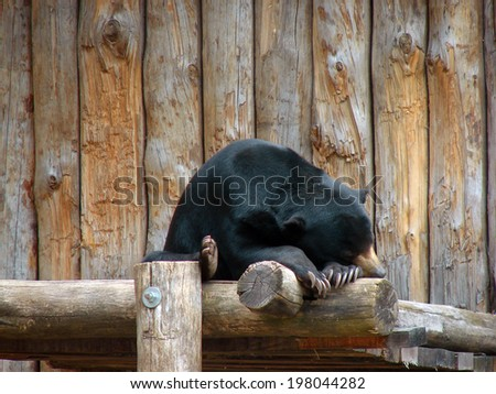 sleeping bear - stock photo