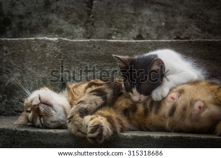 Sleeping calico cat mother (white with black and ginger patches) is feeding her black and white kitten at grey concrete stairs - stock photo
