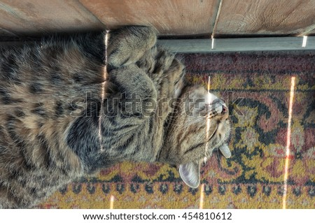 Sleeping cat and sun rays. Relax Funny pose. Warm summer photo.  - stock photo