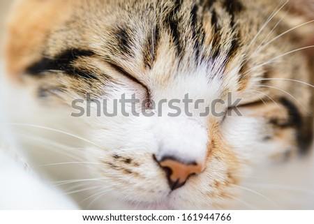 Sleeping cat close up - stock photo