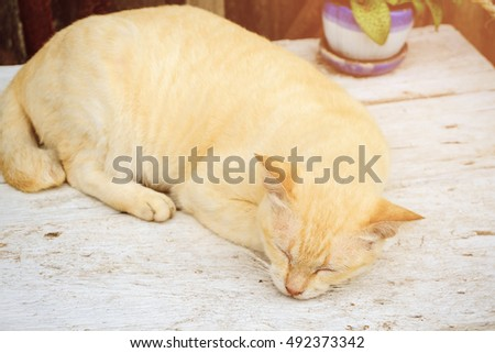 sleeping cat in warm day