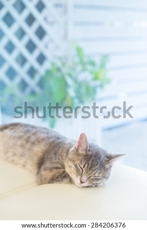 sleeping cat on Studio chair - stock photo