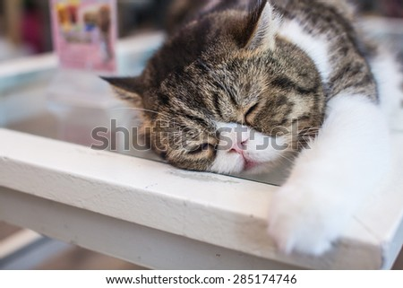 Sleeping Cat on the table. - stock photo