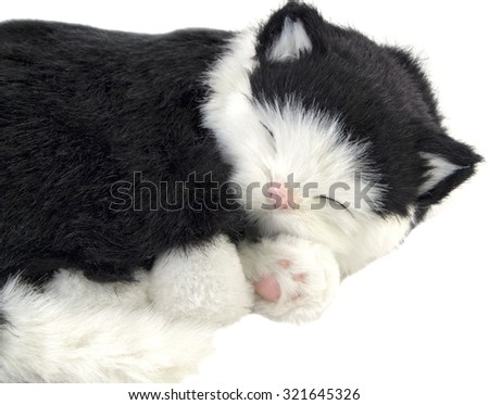 Sleeping cat on white background - stock photo