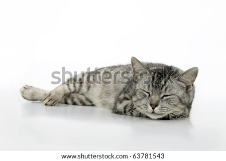 Sleeping cat, on white background. - stock photo