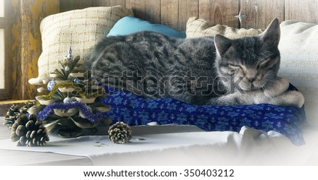 Sleeping cat on winter window background concept composition 3d render - stock photo