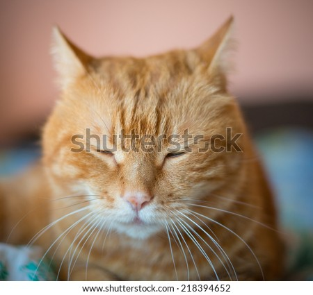 Sleeping cat. Selective focus with shallow depth of field.   - stock photo