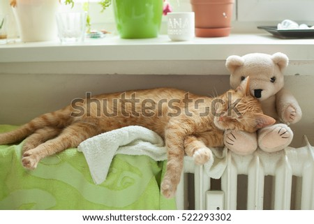 Sleeping cute ginger cat with Teddy bear