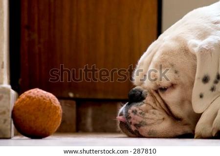 Sleeping Dogs Lie - stock photo