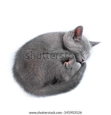 "Sleeping kitten (breed ""Russian Blue"") on white background - stock photo"