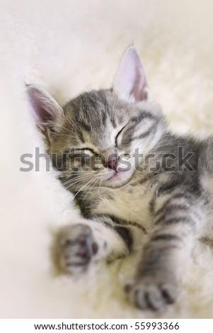 Sleeping Kitten on a white sheepskin - stock photo