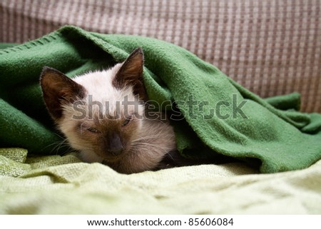 Sleeping kitten with blanket