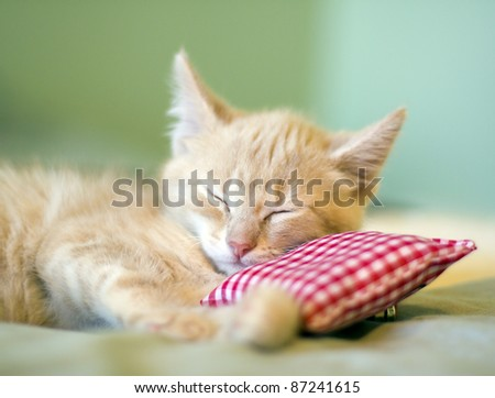 Sleeping Kitty with pillow - stock photo