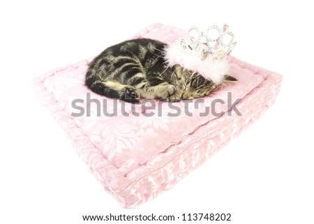 Sleeping little kitten on a pink satin pillow isolated over white - stock photo
