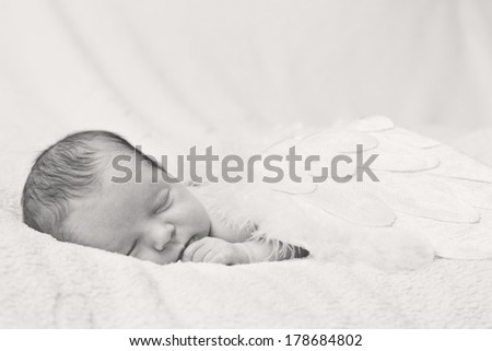 sleeping newborn baby with angel wings on a light background (black and white) - stock photo