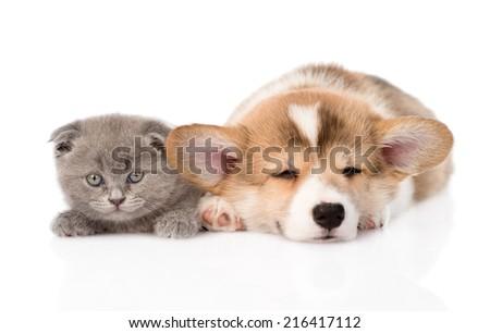 sleeping Pembroke Welsh Corgi puppy and kitten. isolated on white background - stock photo