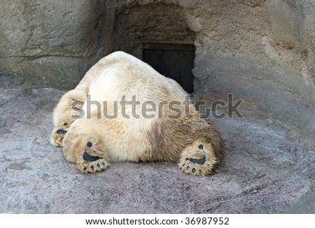 Sleeping polar bear in the Moscow Zoo - stock photo