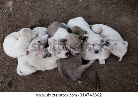 sleeping puppies - stock photo