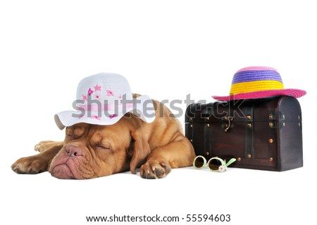 Sleeping Puppy is Ready to Go on Vacation, lying next to  traveling bag - stock photo
