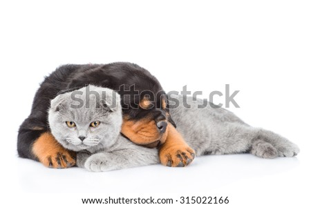 Sleeping rottweiler puppy embracing gray cat. Isolated on white background