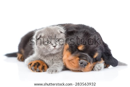 Sleeping rottweiler puppy hugging newborn kitten. Isolated on white background - stock photo