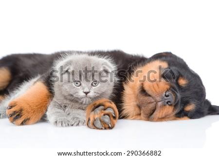 Sleeping rottweiler puppy hugging newborn kitten. Isolated on white background - stock photo