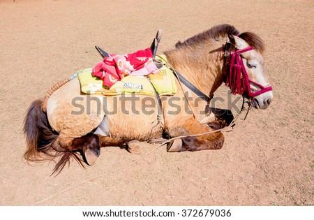 Sleeping tired horse with saddle on sun shine - stock photo