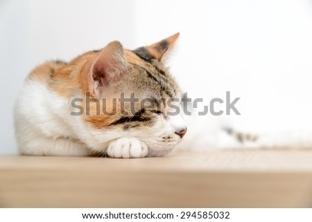 Sleepy cat - stock photo