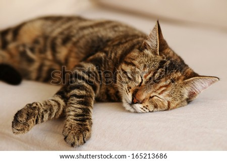 Sleepy cat on a sofa - stock photo