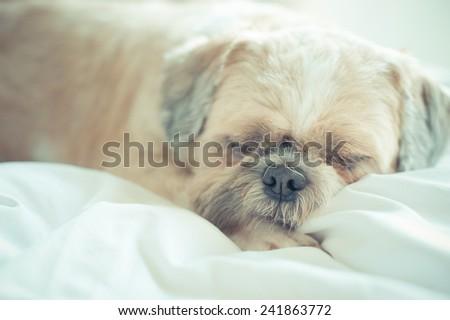 sleepy Dog - stock photo