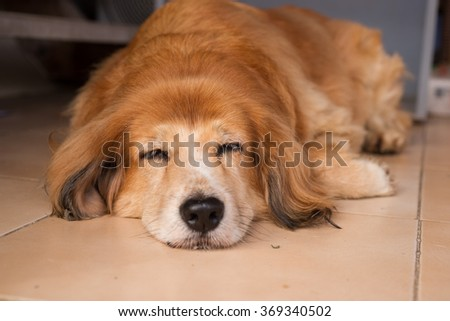 sleepy dog