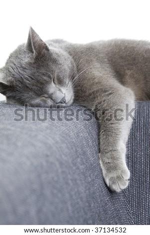 sleepy gray cat on a sofa - stock photo