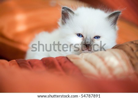 Sleepy kitten on bed