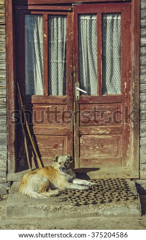 Sleepy mongrel dog resting on stairs, outside in the warm sunlight, near the door threshold of an old rustic wooden house. - stock photo