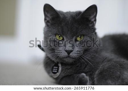 Sleepy Pussycat - stock photo