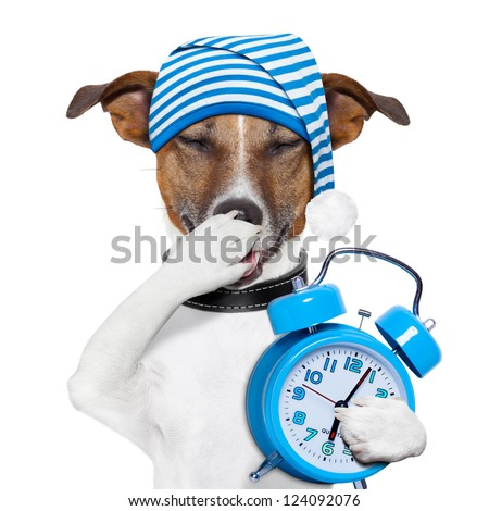 sleepyhead dog tired with clock and funny nightcap - stock photo