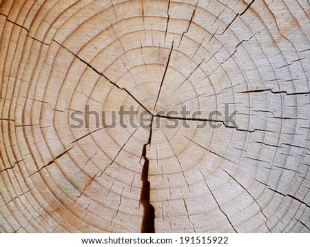 slice from a fir tree with annual rings - stock photo