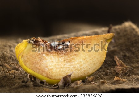 Slice of oxidised quince on a textil bag background - stock photo