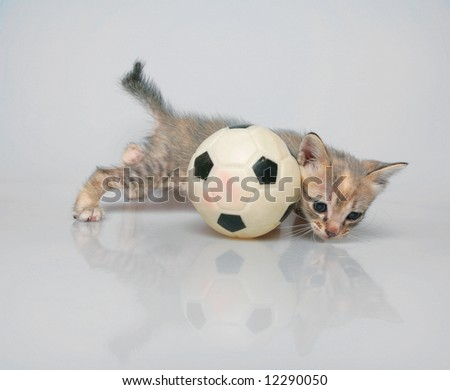 Slippery kitten isolated on white background with plastic ball