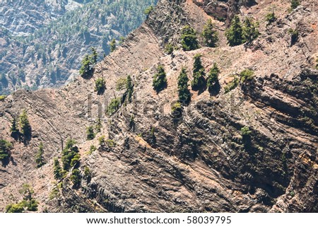 Slope with pine trees for background - stock photo