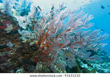 Sloping coral wall off the coast of Bunaken island in North Sulawesi, Indonesia - stock photo