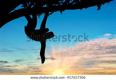 Sloth animal with a toddler in a tree on the sunset background - stock photo