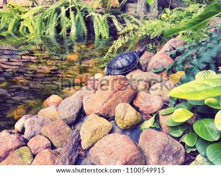 stock-photo-slow-turtle-crawling-on-rock