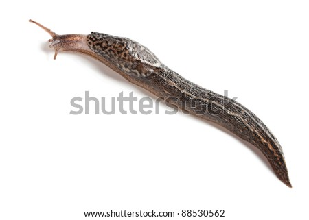 slug on white with natural shadow - stock photo