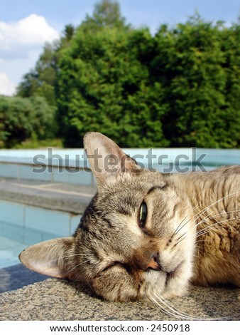 Slumbering cat on the swimming pool edge - stock photo