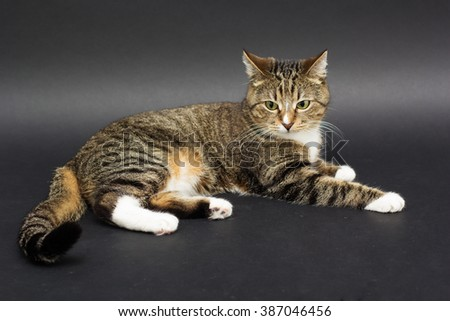 Small adult greeneyed tabby cat isolated on black - stock photo
