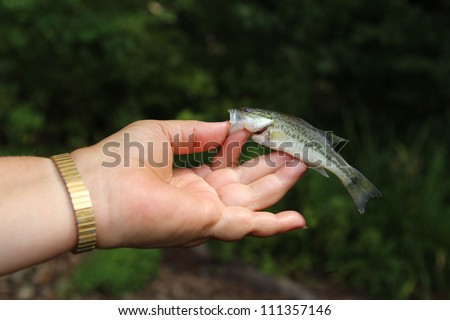 Small Bass Fishing - Fish Catch of the Day - stock photo