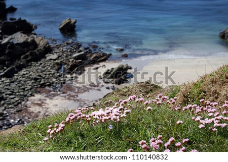 Small bay on the Pembrokeshire coast line with flowers in the foreground - stock photo