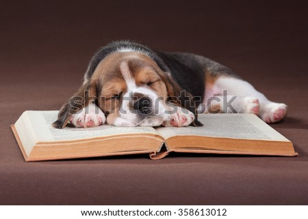 Small beagle puppy sleeping on the book