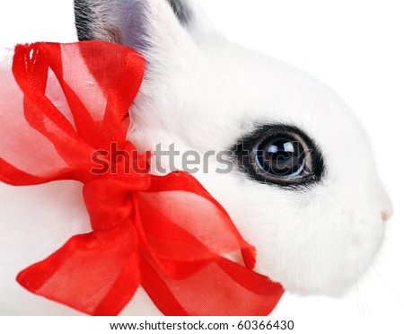 Small beautiful rabbit with  red ribbon on  white background - stock photo
